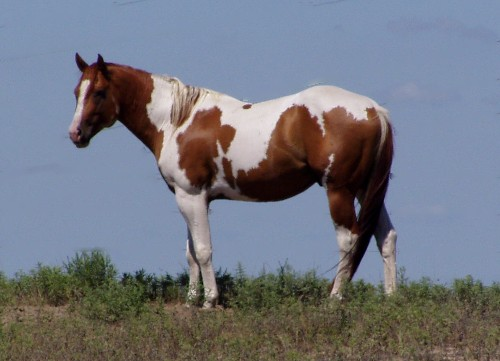 comparing and contrasting william faulkners spotted horses and mule in the yard William faulkner's spotted horses vs mule in the yard: comparison and contrast  comparing and contrasting william faulkner's spotted horses and mule in the.